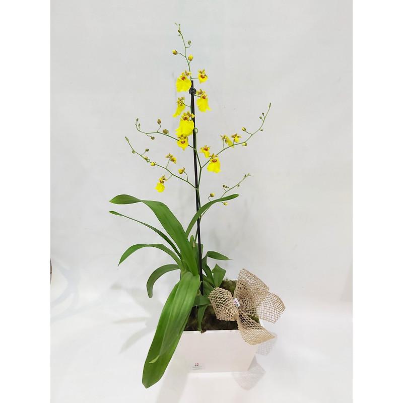 307 Orquídea Chuva de Ouro