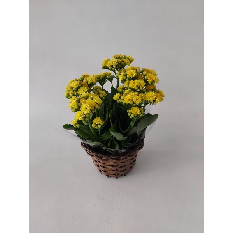 215 Vaso Mini Calandiva