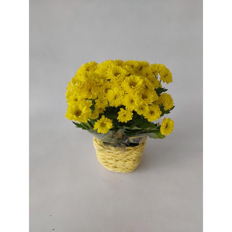 214 Vaso Mini Margarida