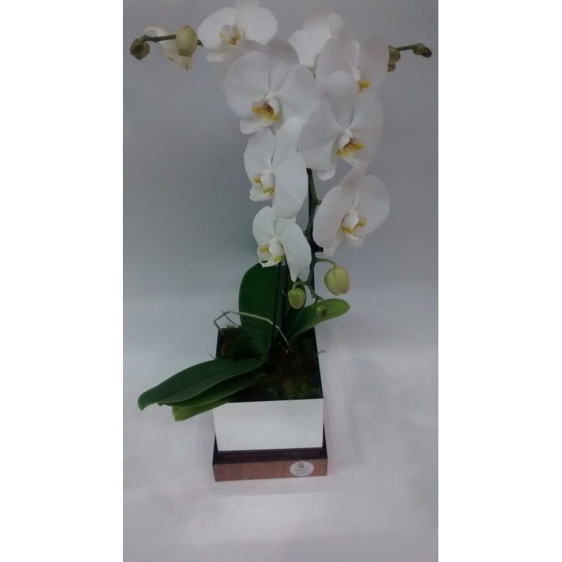 302  Orquídea Cascata